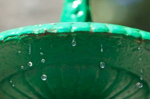 Green Fountain Closeup